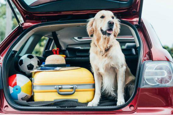 Transportar objetos no banco de trás do carro pode gerar multa grave?