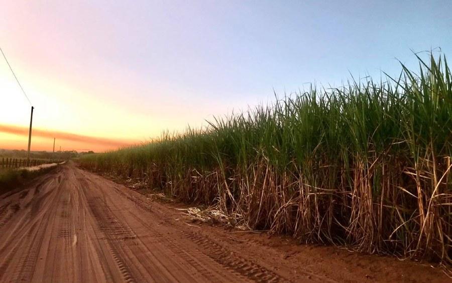 Cana-de-açúcar é principal matéria prima do etanol